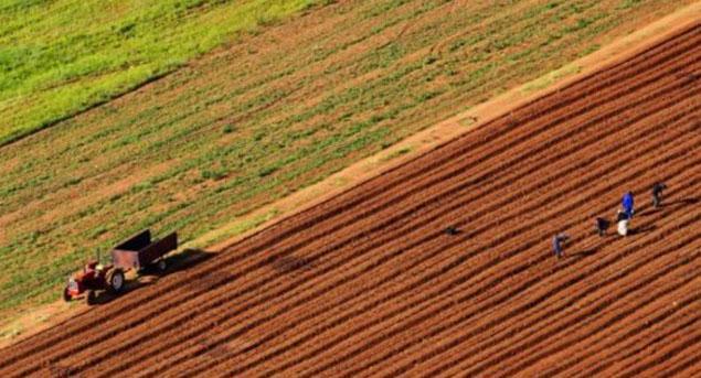 Sudan'da kiralanan arazide tarım başlıyor!