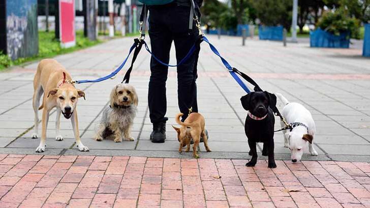 Köpekleri dolaştırırken dikkat etmeniz gerekenler