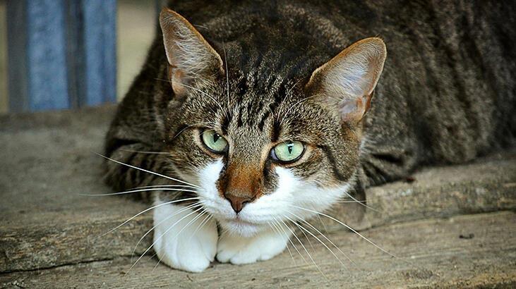 Kediler Ne Yer, Nasıl Beslenir? Kedilerin Sevdiği Besinler Nelerdir?