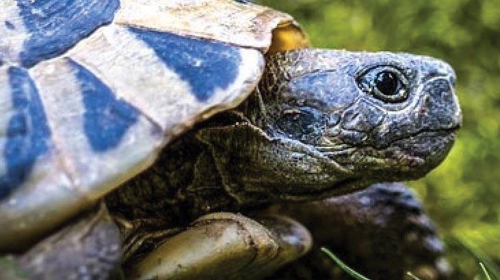 Kaplumbağa Ne Yer, Nasıl Beslenir? Kaplumbağaların Sevdiği Besinler Nelerdir?