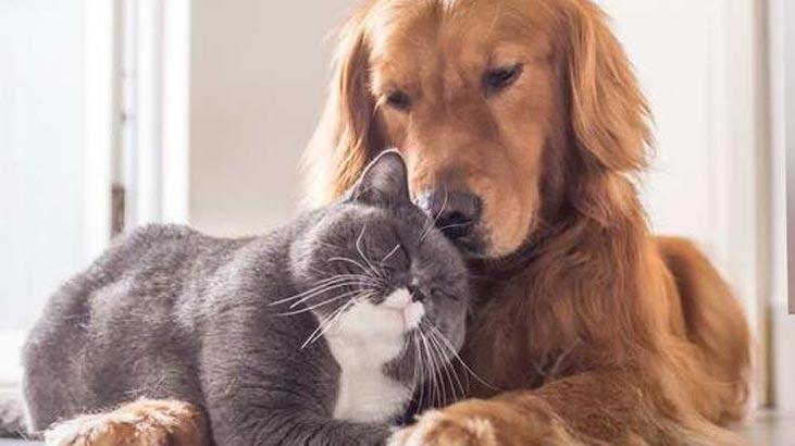 Köpek Cinsleri Ve İsimleri Nelerdir? Kedilerin Türleri İle Özellikleri