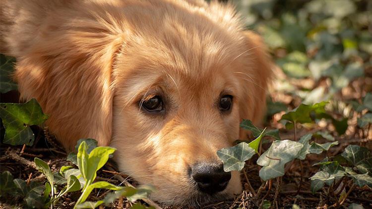 Hayvan dostunuzun vefatıyla başa çıkmanın yolları